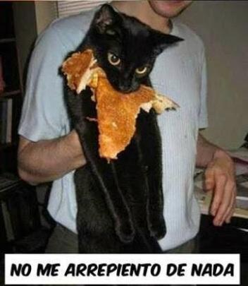 gato-tortitas-pronto-sereis-mios-no-me-arrepiento-de-nada