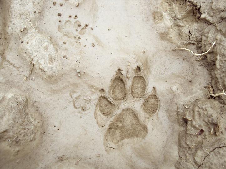 footprint-192852_1920